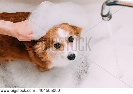 Man's Hand And A Dog In The Foam For Bathing. Dog Hygiene Concept
