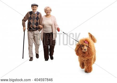 Full length portrait of an elderly couple walking a red poodle dog isolated on white background
