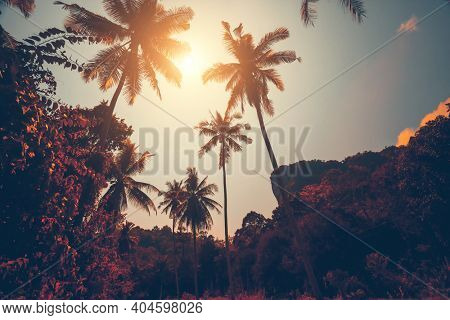 Autumn Thailand jungle resort: sun shine over trees in tropical forest. Majestic Asia exotic nature scape of deciduous rainforest. Amazing Thai scenery in soft warm fall tones at sunny day