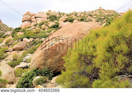 Chaparral Plants Surrounding Large Rocks And Boulders On Arid Badlands Taken At The Mojave Desert In