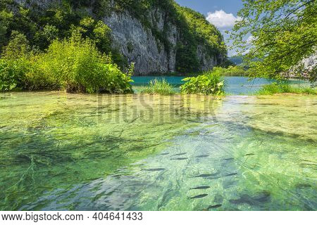 Shoal Of Fishes Swimming In Transparent Turquoise Coloured Lake. Terraced Lakes In Plitvice Lakes Na