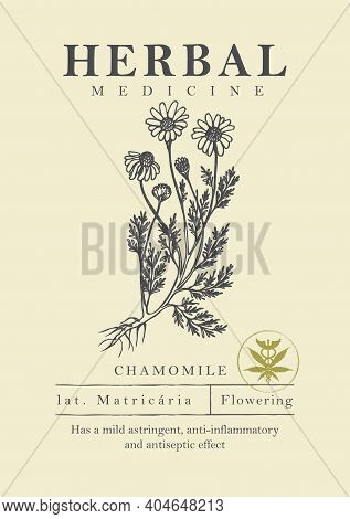 Botanical Illustration Of A Hand-drawn Chamomile Plant In Retro Style. Vector Banner Or Label For He