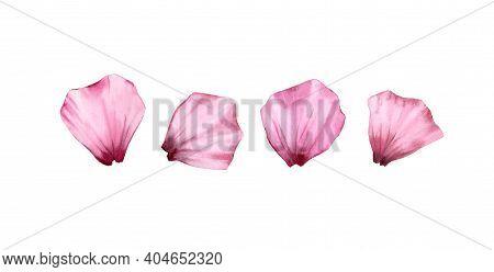 Watercolor Rose Petals Set. Four Pink Transparent Petals. Realistic Hand Drawn Illustration Isolated