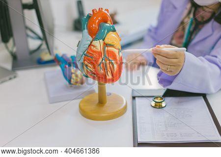 Doctor Explaining Heart To Elderly Patient. Doctor Explaining The Heart Model. Doctors Pen Point To