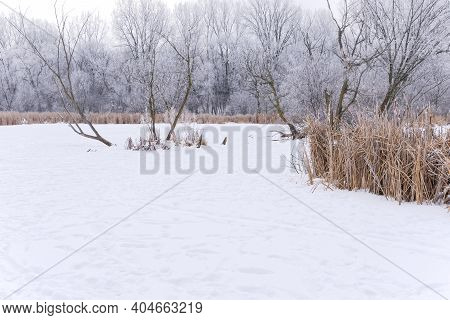 Hoar Frost On Trees And Frozen Snow Covered Pond