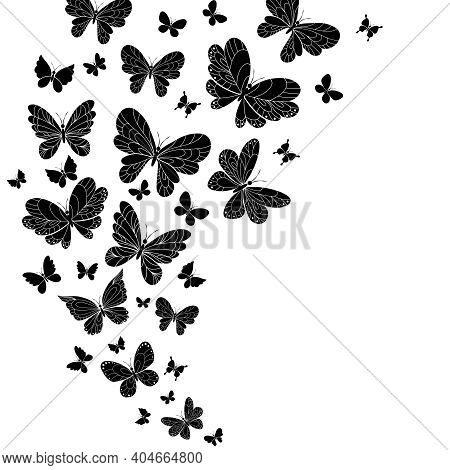 Flowing Curving Design Of Different Shaped Black And White Flying Butterflies With Outspread Wings I