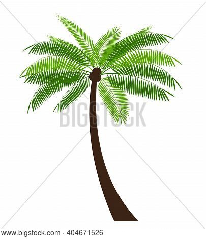 Palm Simple Icon Leaf Vector Illustration On White Background