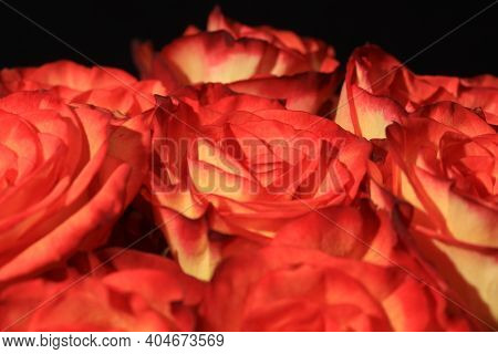 A Bouquet Of Wonderful Orange Roses Closeup