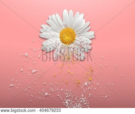 Daisy Flower Dispersion On The Light Pink Background