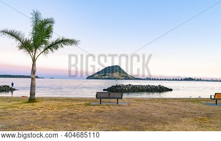 Landmark Mount Maunganui On Horizon Across Tauranga Harbour From Sulphur Point With Palm Tree And Em