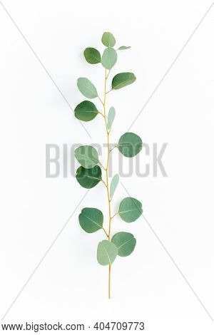 Green Branch With Eucalyptus Populus Leaves On White Background. Lay Flat, Top View