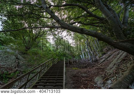 Wooden Steps Among The Forest, In The Mountains. Denmark. Mons Clint. Travels. Nature.