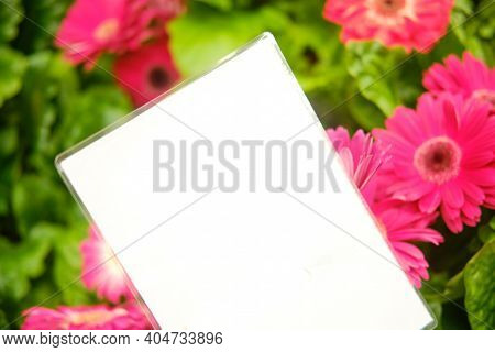 Gerbera Is Native To Tropical Regions Of South America, Africa And Asia. The First Scientific Descri