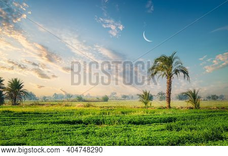 Field And Palm Trees Near The Nile River In Egypt