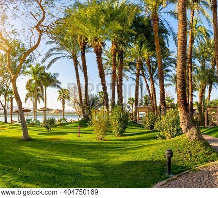 Green Grass Field With Palm Tree In Public Park