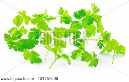 Parsley Leaf Isolated On White Background. Fresh Parsley Herb Top View. Flat Lay. Collection