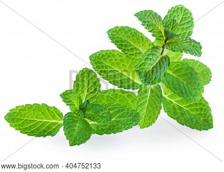 Fresh Mint  Leaf  Isolated On A White Background. Macro.  Peppermint Herb. Organic Melissa Close-up
