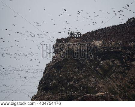 Islas Ballestas Islands Pacific Rock Formation Peruvian Booby Cormorants Bird Marine Wildlife Paraca