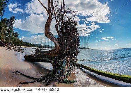 Dead tree trunk on tropical beach. Nai Yang beach. Phuket. Thailand