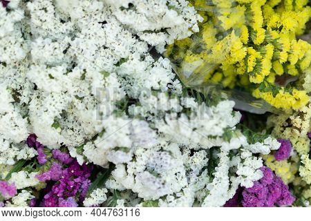 Beautiful Flowers Background, Colorful Verbena Flower Background.