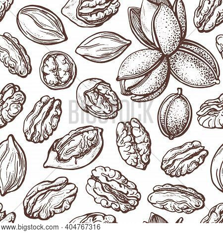 Pecan Nuts Seamless Pattern In Vintage Style. Vector Texture Silhouettes Sketch. Botanical Illustrat