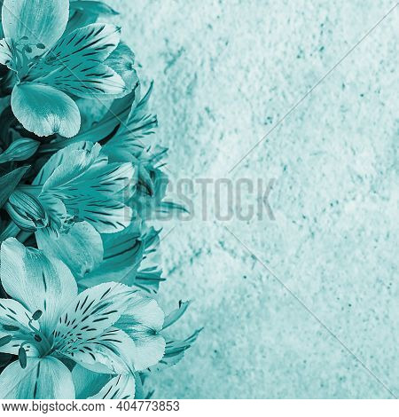 Layout For A Greeting Card. A Bouquet Of Beautiful Aquamarine Orchids On A Light Background. Mocap,