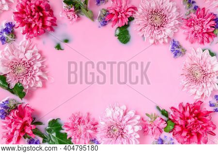 Frame Of Chrysanthemum Or Mums Flowers Floating In Pink Milk Water Bath. Beauty Spa, Relaxation And