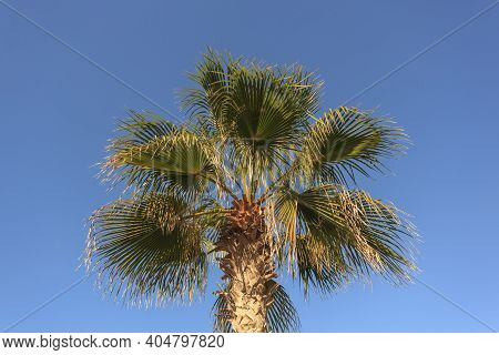Tropical Green Palm Leaf Isolated On The Blue Sky