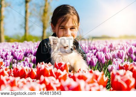 Cute Teenager Girl With Long Hair Smelling Tulip Flower On Tulip Fields In Amsterdam Region, Holland