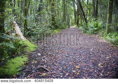 Path Leading Through Regenerated Forest Around And Near Lake Wilkie In Catlins In Southland New Zeal