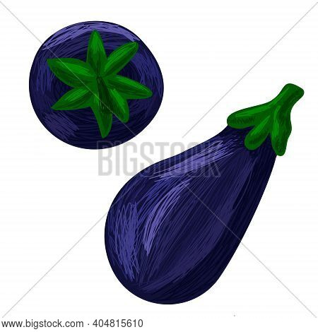 Vector Drawn Illustration With Set Of Eggplant
