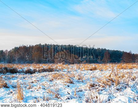 Winter Landscape Of Winter Meadow With Forest On The Horizon. White Snow. Cloudy Horizon. Blue Sky.
