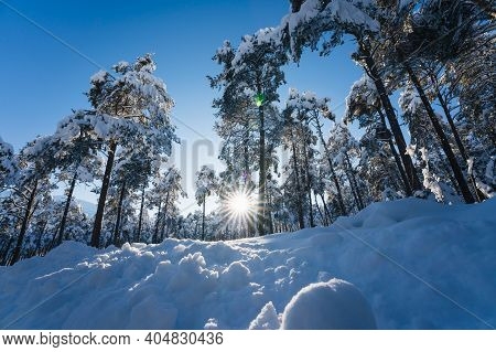 Snow Covered Firs In Alpine Forest In Sunlit Winter Landscape With Sun Star, Wildermieming, Tirol, A