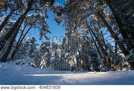 Snow Covered Walking Path Through Sunny Fir Forest In Alpine Winter Landscape, Wildermieming, Tirol,