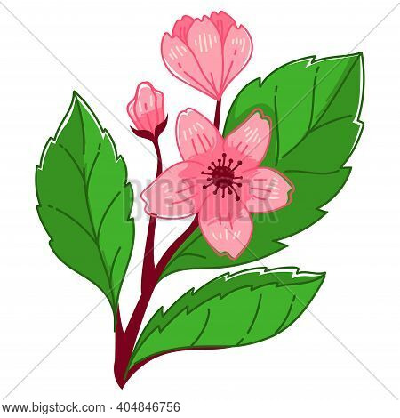 Blooming Sakura Tree, Cherry Blossom Branch Vector