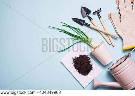 Garden Shovels On A Blue Background . Gardening Layout. Spring Planting. The Care Of Plants. Work In
