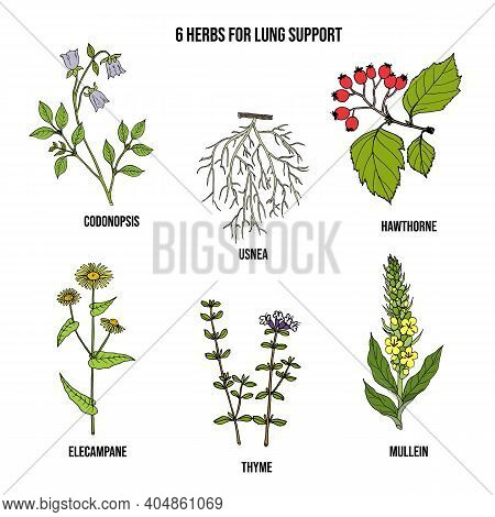 Set Of Best Herbs For Lung Support. Hand Drawn Botanical Vector Illustration