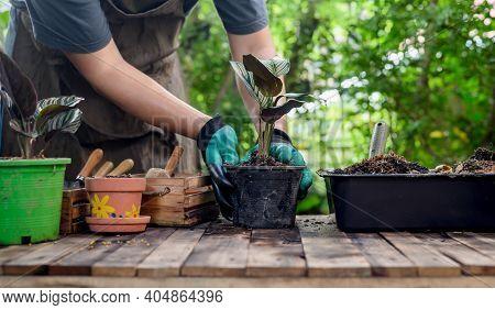 Home Gardening When Lock Down. Recreation Activity At Botanic Garden During The Corona Virus Crisis.
