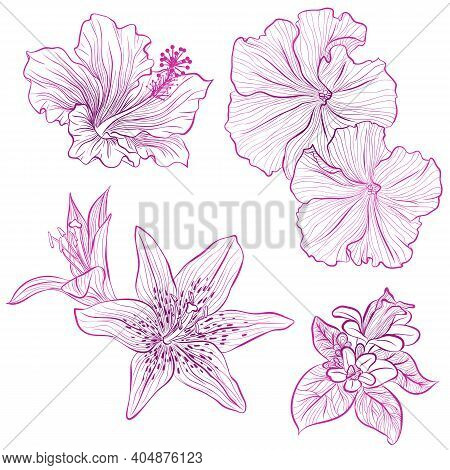 Vector Illustration In Line Art Style. Set Of Flowers Of Hibiscus, Petunia, Lily Isolated On White B