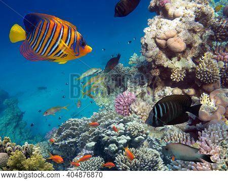 Beautiful Coloured Hard Coral Reef. Red Sea.