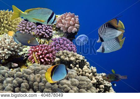 Coral Reef With Hard Corals. Red Sea. Egypt