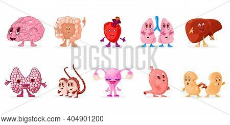 Funny Collection Of Body Organs, Brain, Intestine, Heart, Lungs, Liver, Thyroid Gland, Testicles, Ut
