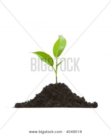 Cultivation Of A Young Plant