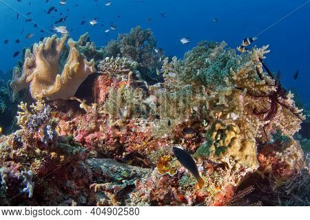 Different Forms Of Underwater Life Of A Coral Reef. Hard, Soft Corals Of Different Species With Fish