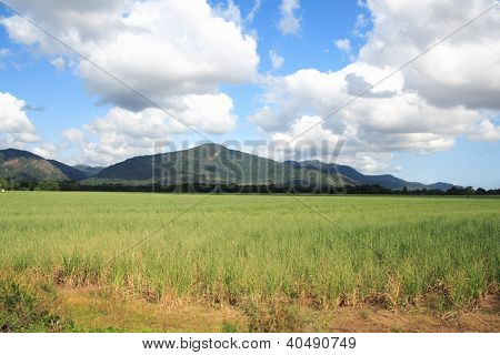 Australian landscape with mountain close to Cairns