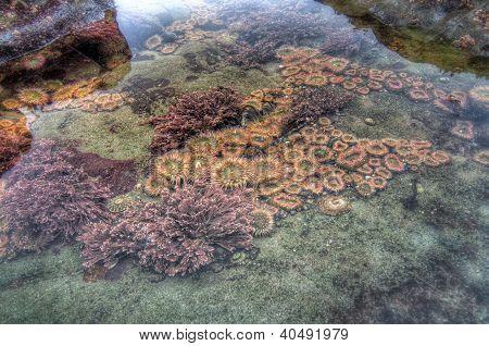 Sea Creature In Tidal Pool