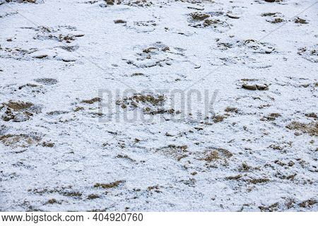 Beautiful Original Winter Sand Background On The Beach With Footprints On The Baltic Sea Covered Wit