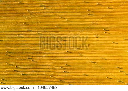 Aerial View Of Summer Hay Rolls Straw Field Landscape In Evening. Haystack, Hay Roll In Sunrise Time