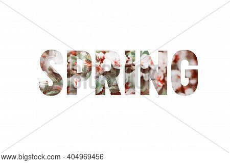 Beautiful Lettering Of The Word Spring On A White Background. The Concept Of Congratulations On The