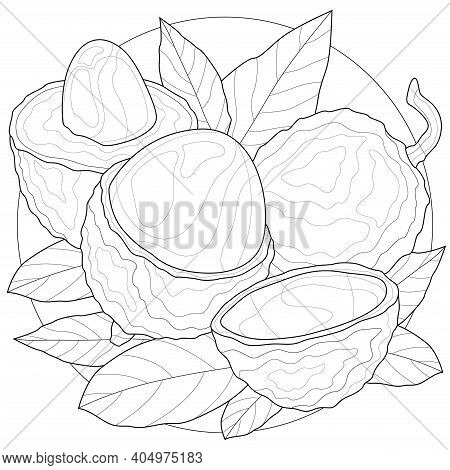 Lychee Fruit.coloring Book Antistress For Children And Adults. Illustration Isolated On White Backgr